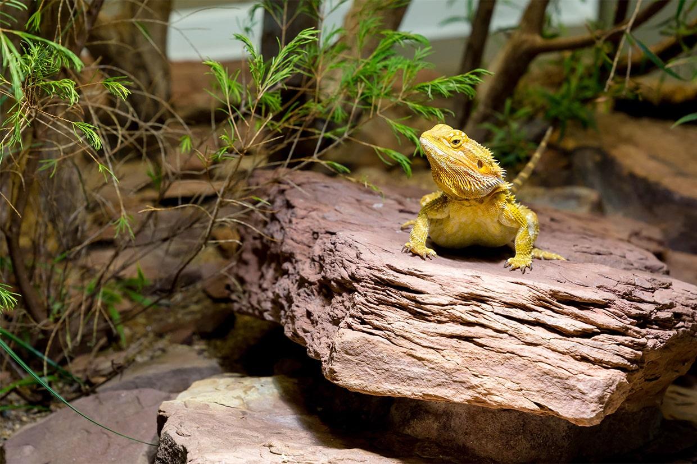 Animalerie Reptile