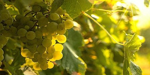 CAPa Métiers de l'Agriculture Viticulture