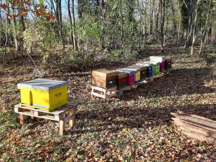 A la découverte des abeilles